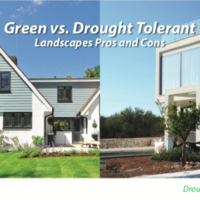 Green Lawns Vs Drought Tolerant Landscapes