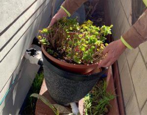 Flowerpot GreywaterFilter