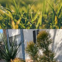 Thinking About A Drought Tolerant Landscape? Think Again!